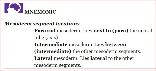 Medical Mnemonics Action Potential